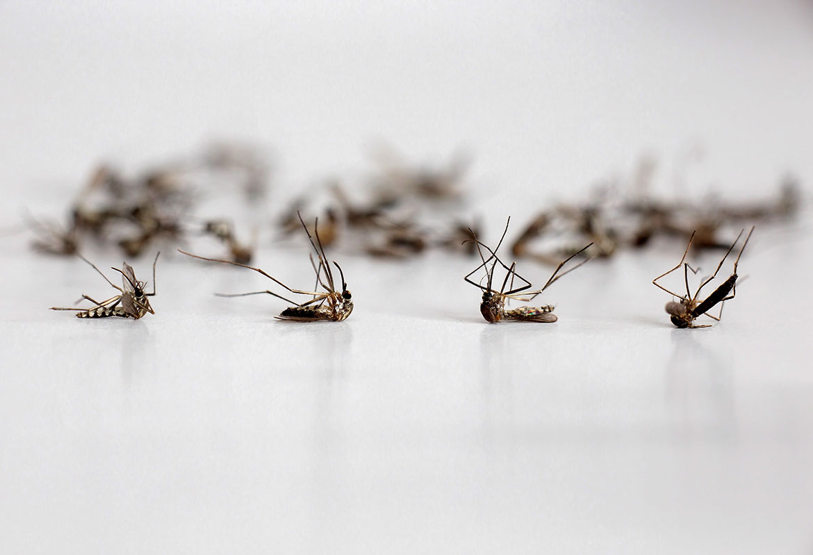 First mosquitoes test positive for West Nile virus in IL