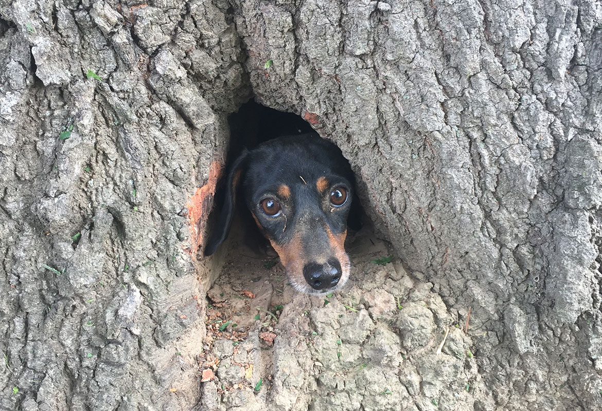 Off-duty troopers rescue Ky. dog trapped in tree